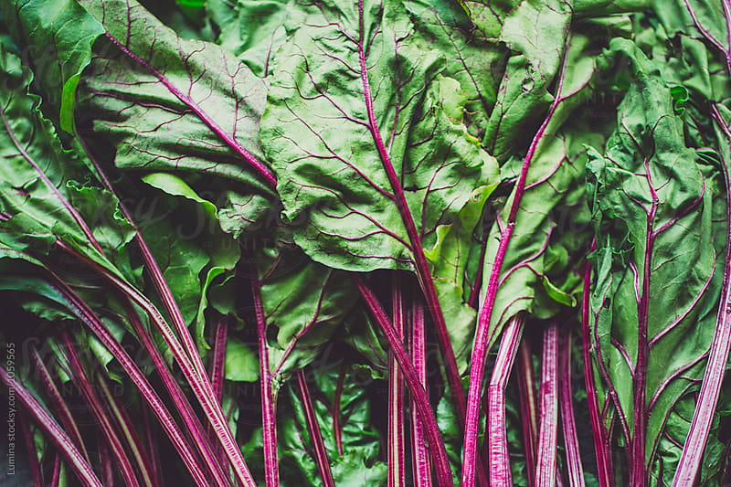 Leaves of Beetroots by Lumina for Stocksy United