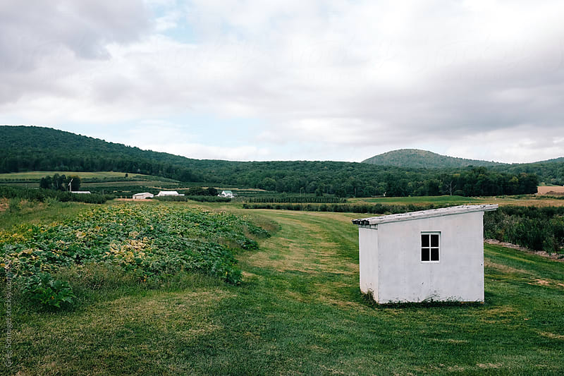 A small white shed barn in the middle of a green pasture in a rural countryside by Greg Schmigel for Stocksy United