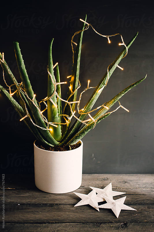 Aloe Vera with fairy lights and white stars by Helen Rushbrook for Stocksy United
