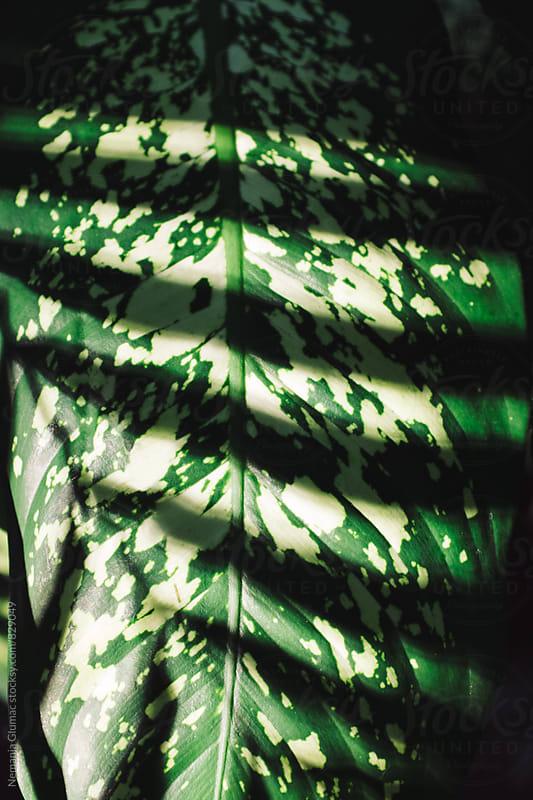 Complex Leaf Pattern With Palm Tree Shadow by Nemanja Glumac for Stocksy United