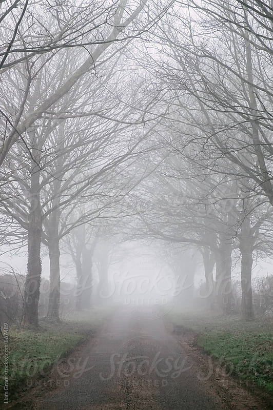 Avenue of trees beside a country road in fog. Norfolk, UK. by Liam Grant for Stocksy United