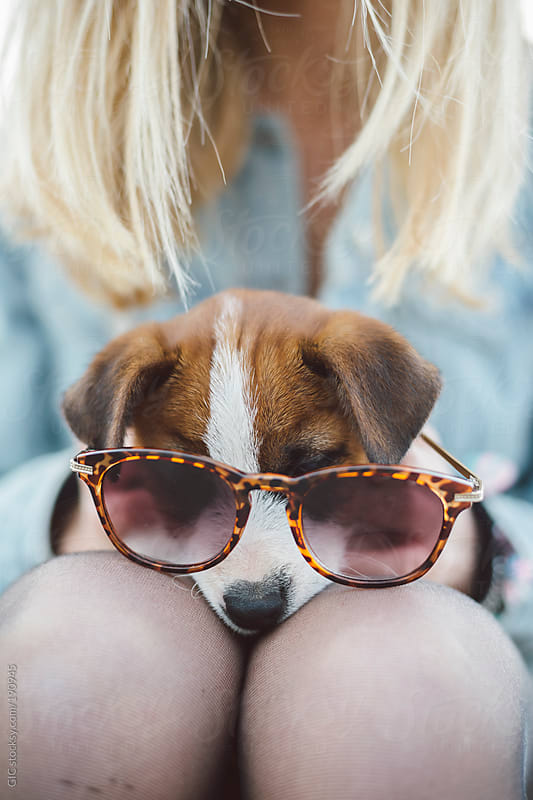 Jack Russell puppy with sunglasses by GIC for Stocksy United