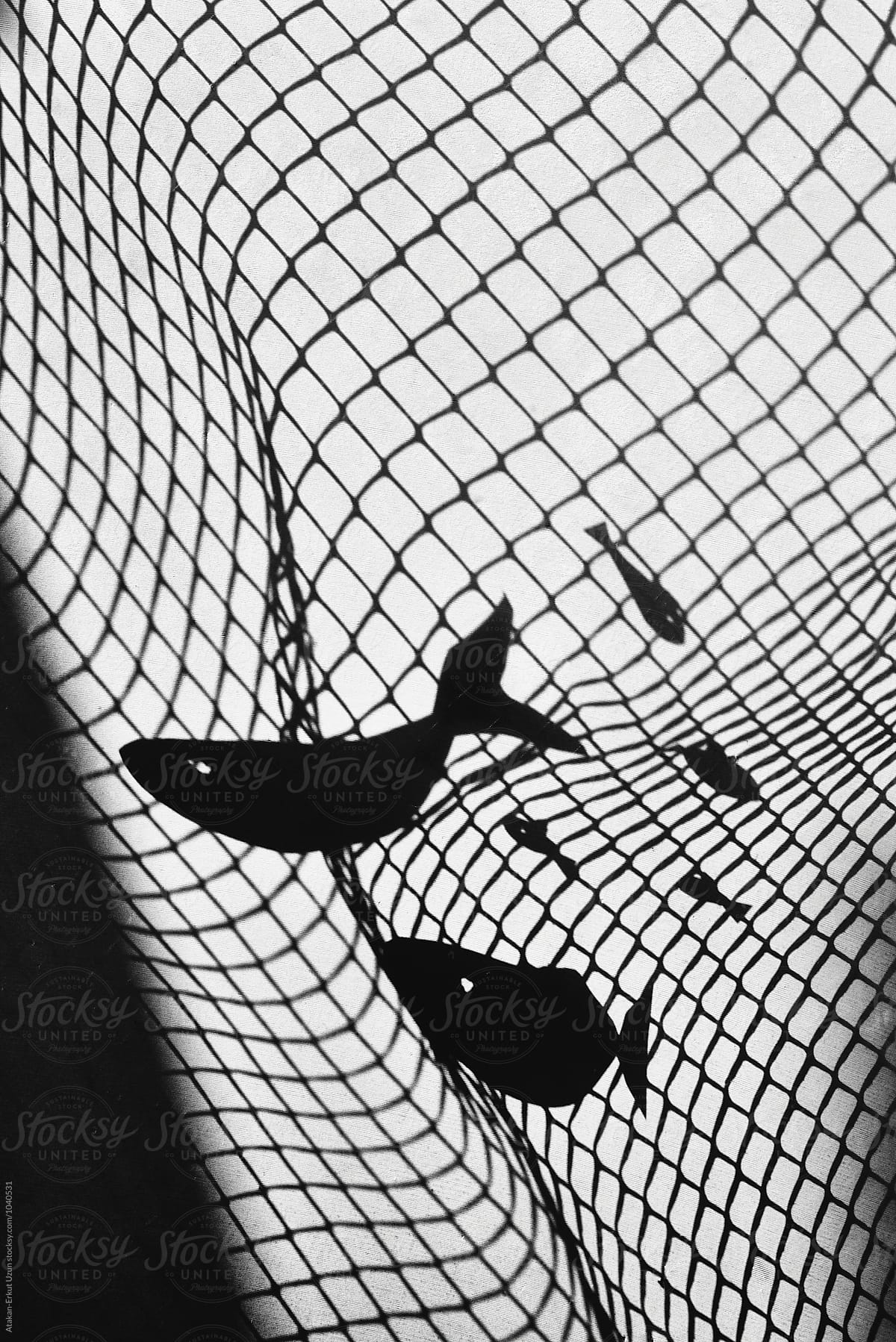 Stock Photo - Shadow Play Of Fish Caught In Net