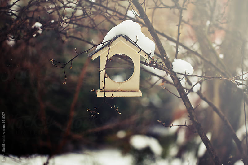 Covered in snow wooden bird feeder hanging from tree branch by Laura Stolfi for Stocksy United