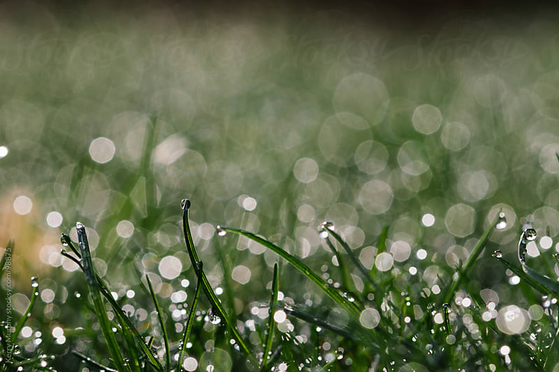 Macro of grass with water drops by Kerry Murphy for Stocksy United