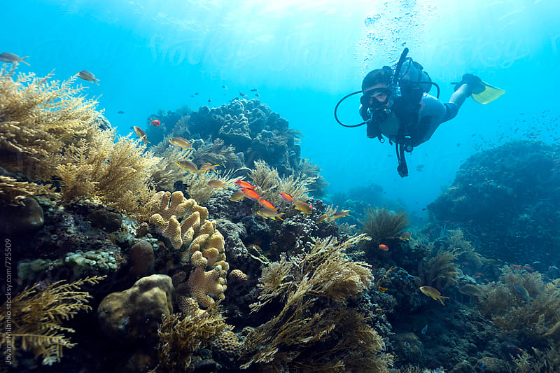 Scuba Diver exploring underwater world of Bali by Jovana Milanko for Stocksy United