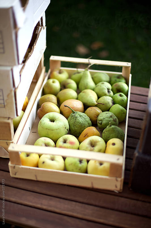Choice of ancient and rare cultivar of fruits in wooden crate by Laura Stolfi for Stocksy United