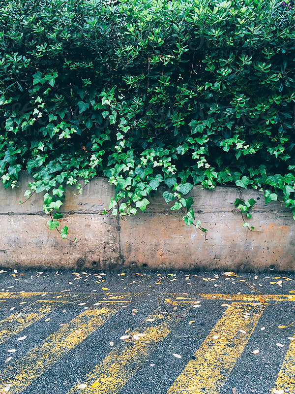 Parking lot with green ivy background by German Parga for Stocksy United