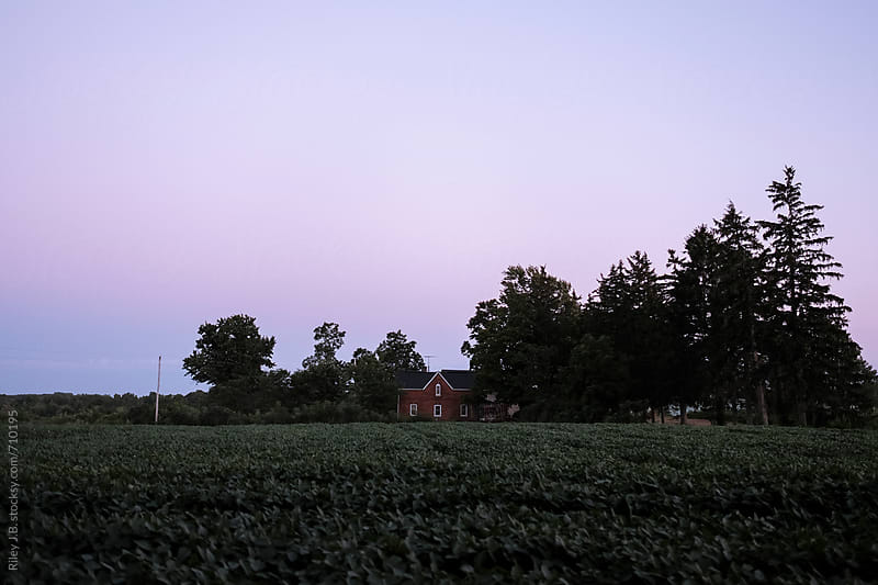 Red brick farmhouse surrounded by crops at dusk by Riley Joseph for Stocksy United