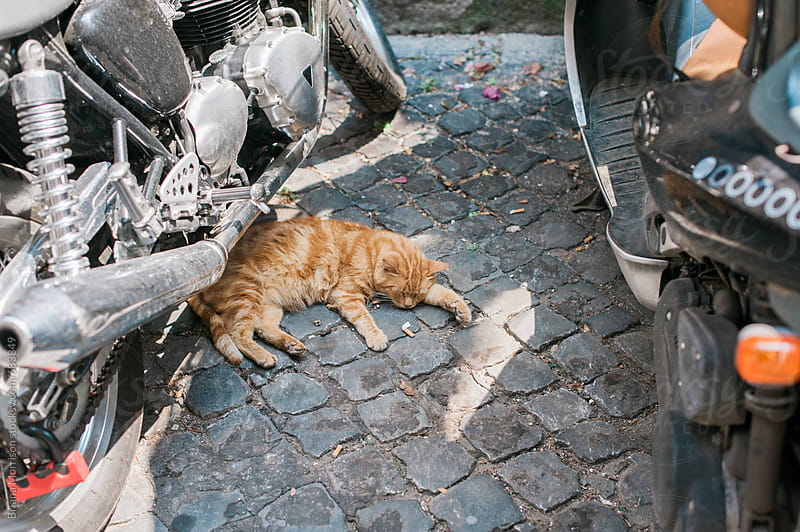 Cat sleeping under a Scooter. by Briana Morrison for Stocksy United