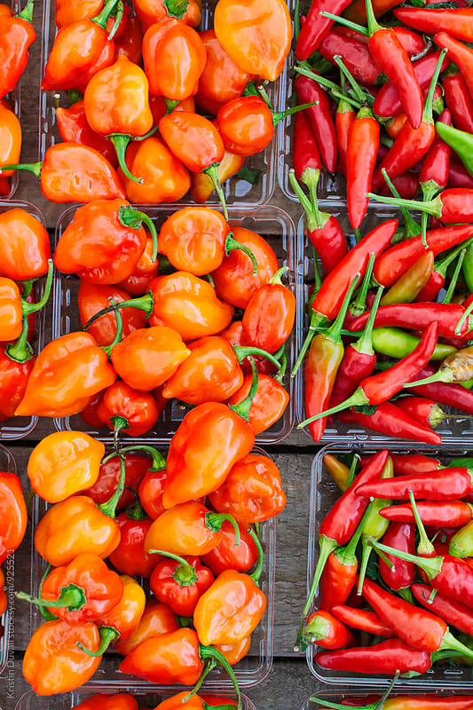 Habanero peppers and hot chile peppers by Kristin Duvall for Stocksy United