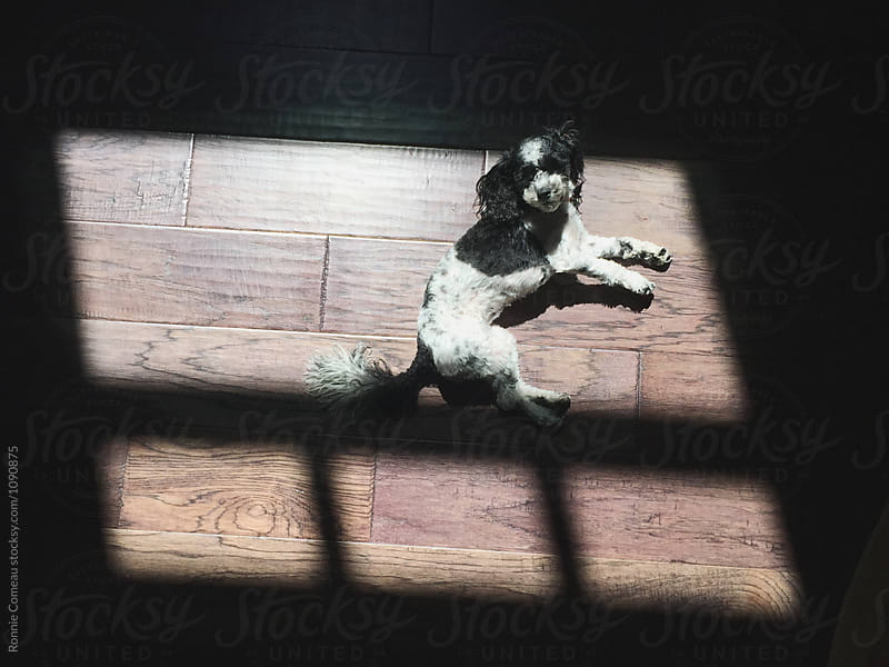 Dog Lying In Sun by Ronnie Comeau for Stocksy United