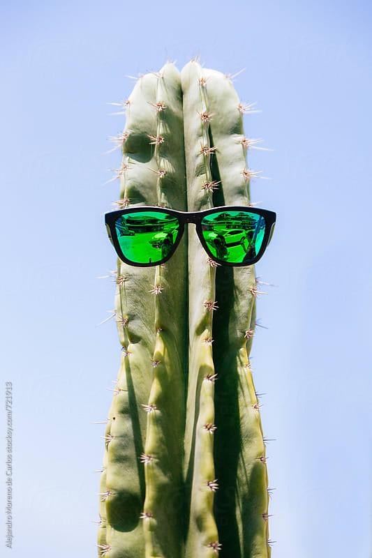 Mr Cactus - Cactus with green sunglasses by Alejandro Moreno de Carlos for Stocksy United
