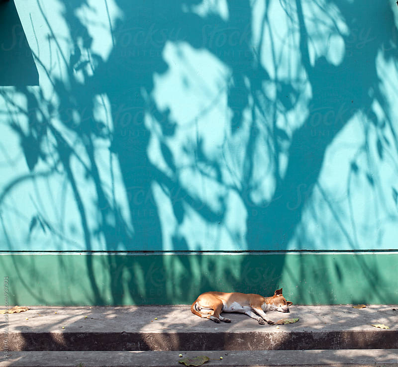 A stray dog relaxing by PARTHA PAL for Stocksy United
