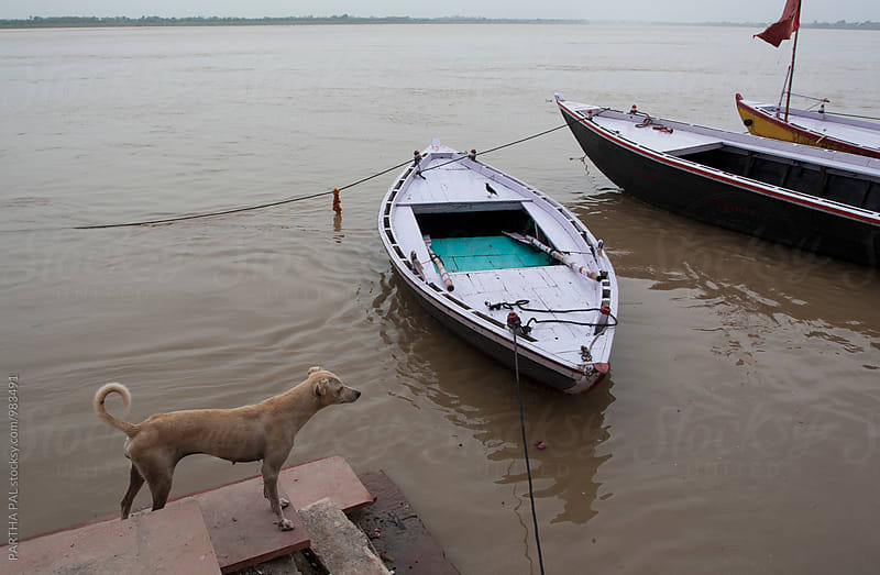 A dog and a crow in Varanasi city by PARTHA PAL for Stocksy United
