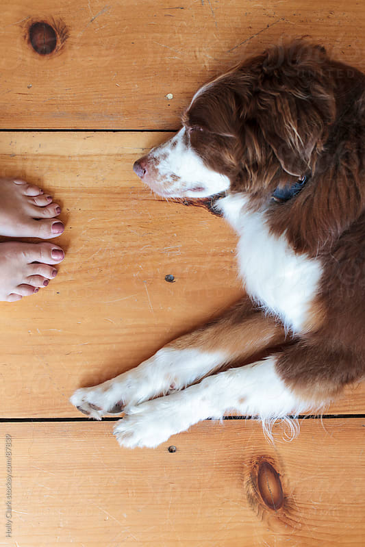 Woman's feet next to a dog on a hardwood floor. by Holly Clark for Stocksy United
