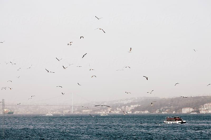 Bosphorus Birds by Agencia for Stocksy United