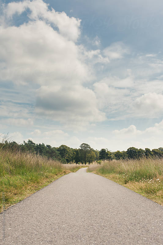 Long road through a field towards a forest in the summer by Cindy Prins for Stocksy United
