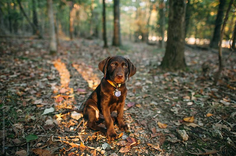 Puppy Sitting in the Woods by michelle edmonds for Stocksy United
