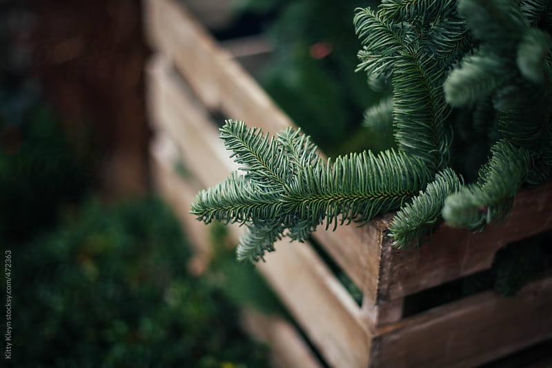 A crate of pine branches by Kitty Kleyn for Stocksy United