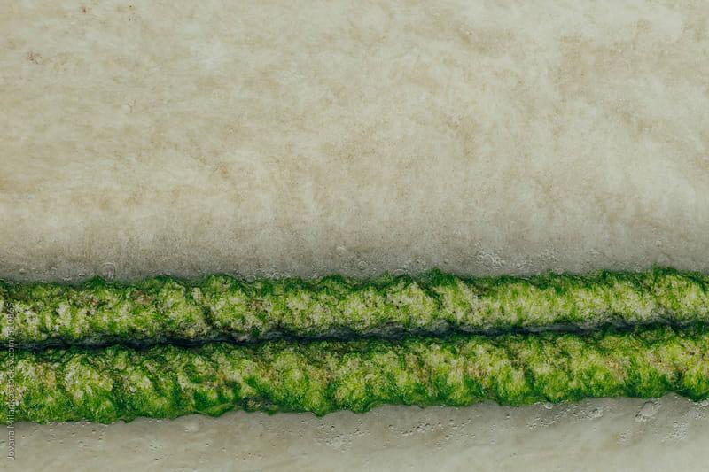 Rope covered in algae  by Jovana Milanko for Stocksy United