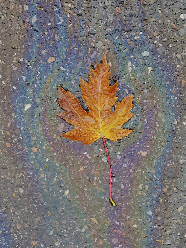 orange fall leaf on the ground by rolfo for Stocksy United