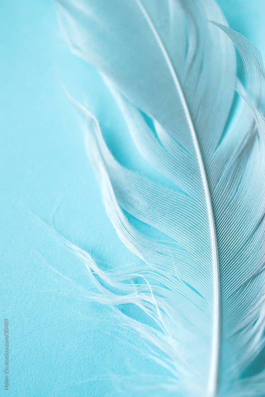 white feather on blue by Helen Yin for Stocksy United