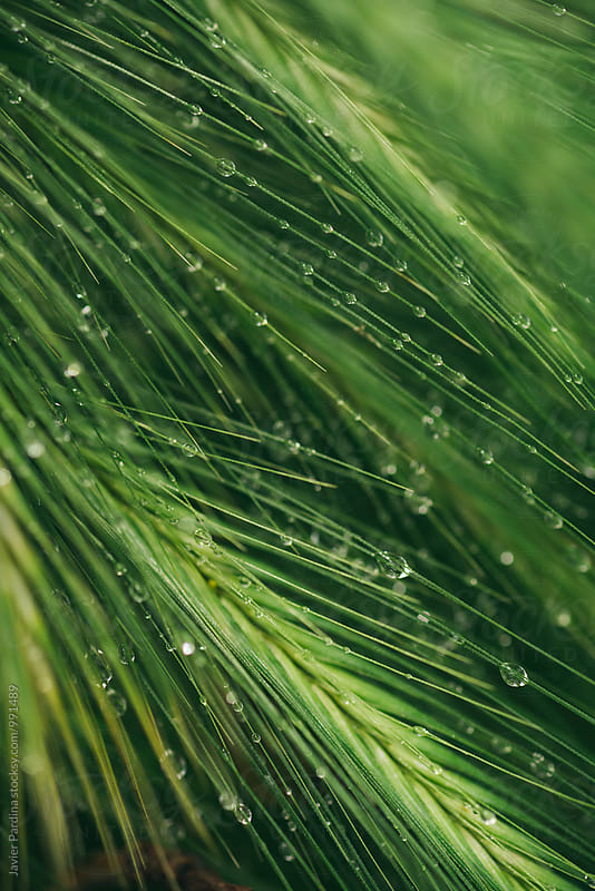 Details of forest after rain by Javier Pardina for Stocksy United