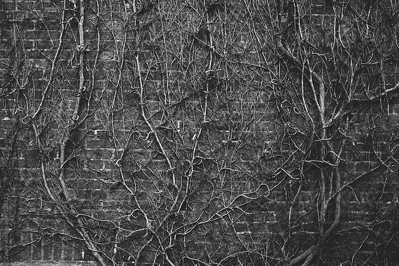 Branches on the wall by Zocky for Stocksy United
