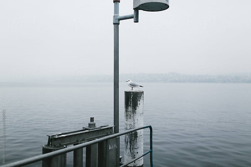 bird sitting on railing by dock at foggy lake by Nicole Mason for Stocksy United