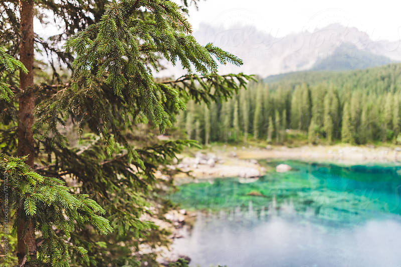 Fir Trees Surrounding a Lake in the Italian Alps by Giorgio Magini for Stocksy United
