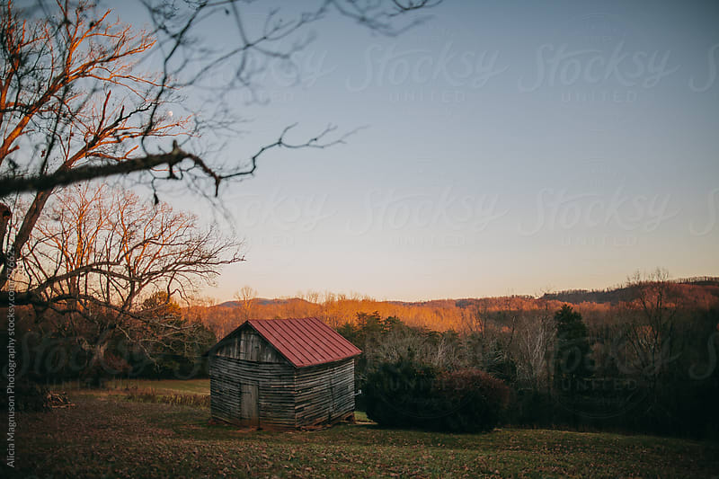 Cabin Overlooking Forest at Sunset by Alicia Magnuson Photography for Stocksy United