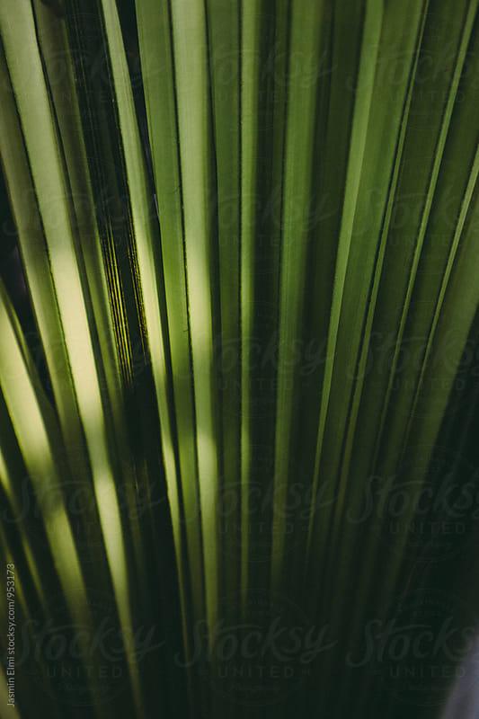 Tropical Plant by Jasmin Elmi for Stocksy United