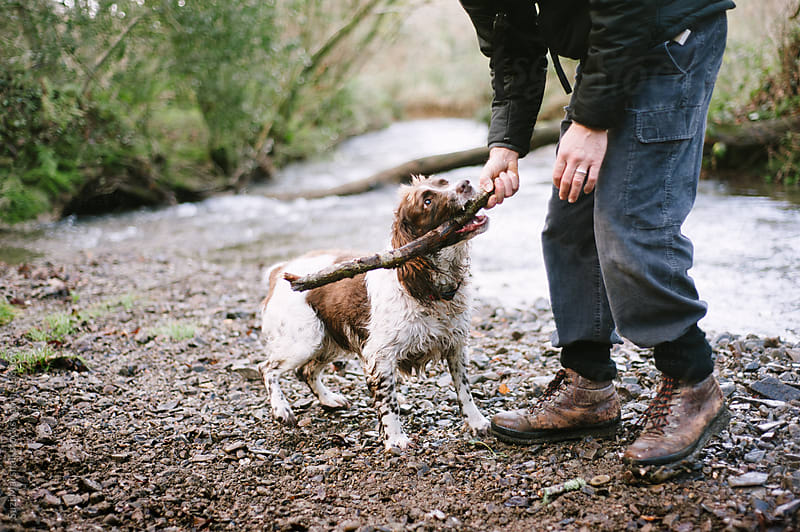 Dog and man playing with a stick by Suzi Marshall for Stocksy United
