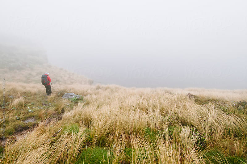Woman trekker, tussock and lake, Kahurangi National Park, New Zealand. by Thomas Pickard for Stocksy United
