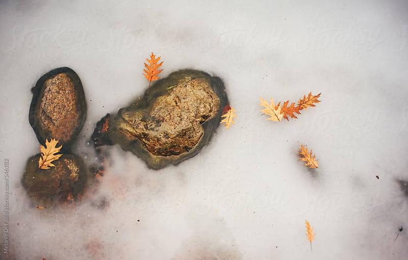 Frozen Lake by Melanie DeFazio for Stocksy United