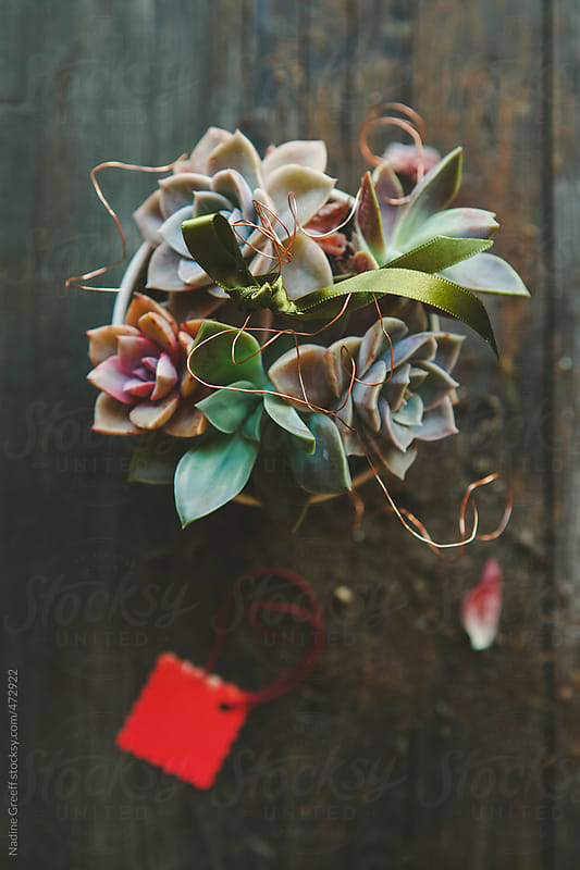 Succulents decorated in planter with decorative wire, ribbon and gift tag by Nadine Greeff for Stocksy United