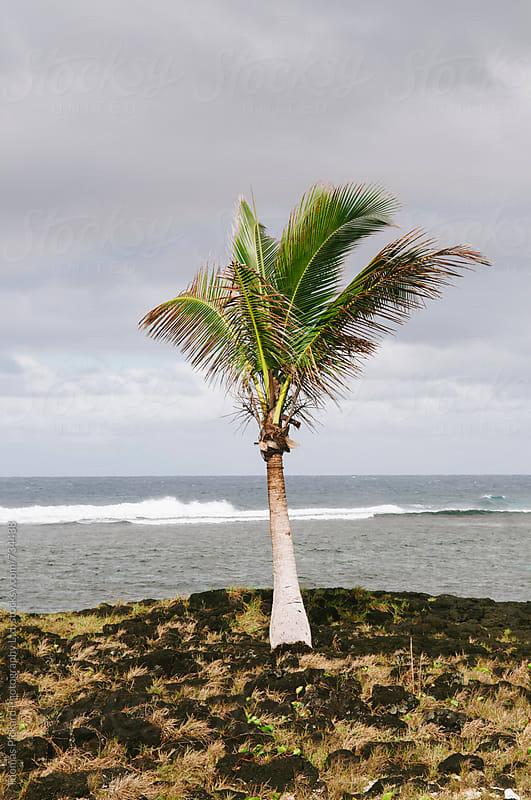 Palm and lava, Samoa. by Thomas Pickard Photography Ltd. for Stocksy United