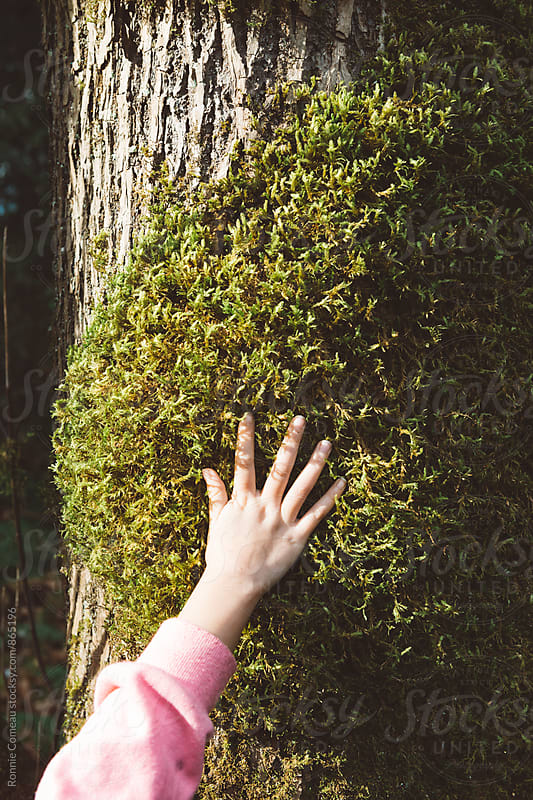 Little Hand On Big Mossy Tree by Ronnie Comeau for Stocksy United