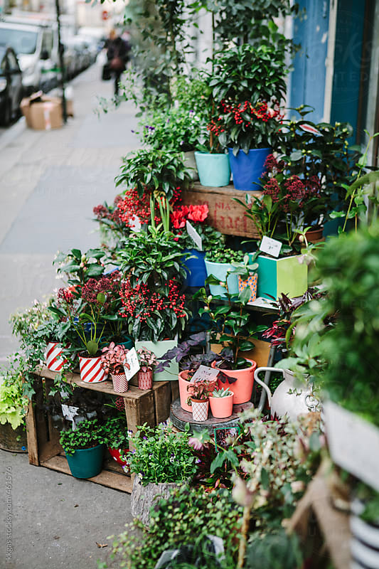 Plants and flowers on display outside a florist shop by kkgas for Stocksy United