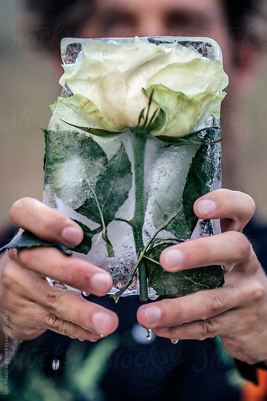 man holding a block of ice ,with frozen white rose, that melts and drips by Igor Madjinca for Stocksy United
