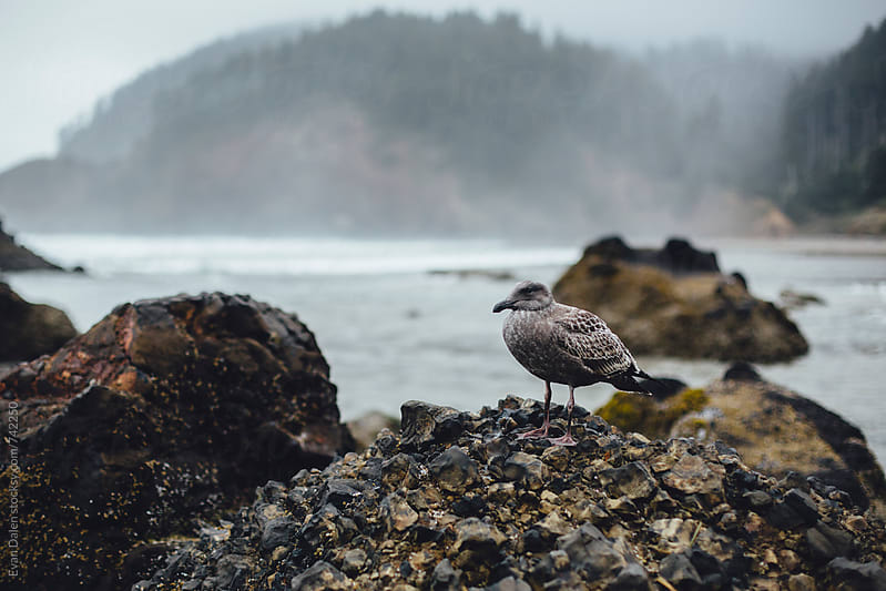 Seagull Perched on Rock, Stormy Coast by Evan Dalen for Stocksy United