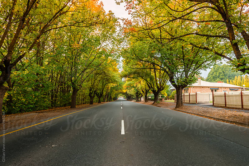 autumn street scenes, South Australia by Gillian Vann for Stocksy United