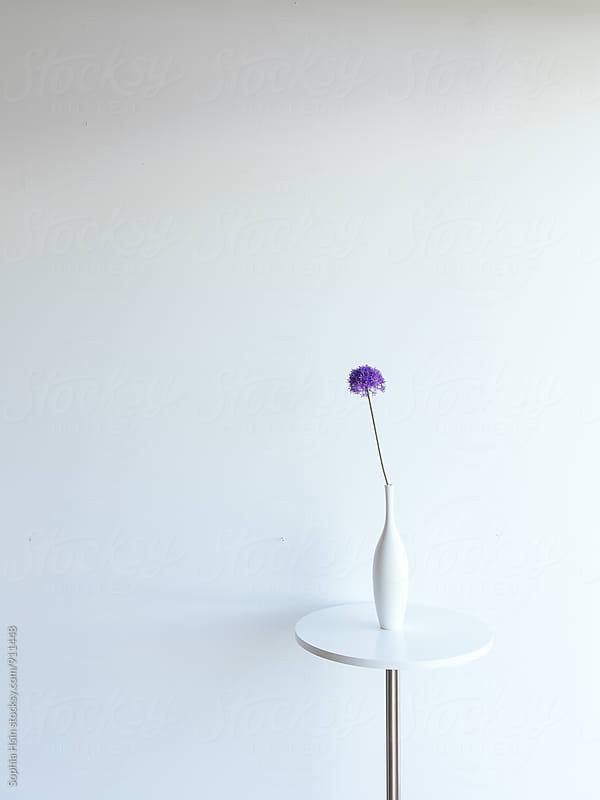 Flower on White Table by Sophia Hsin for Stocksy United