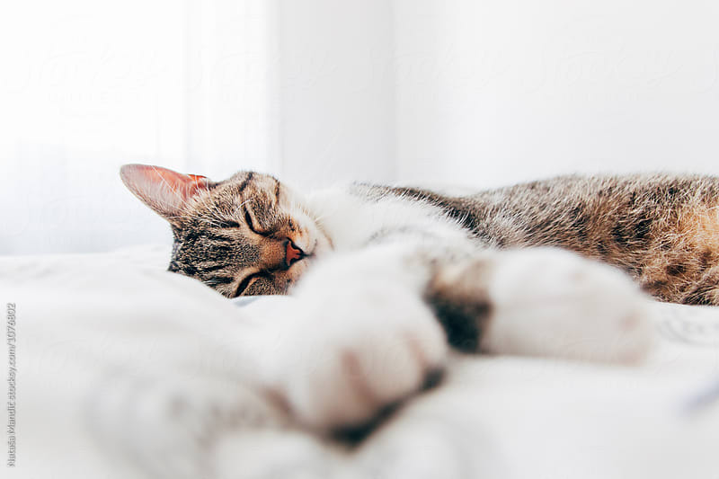 Close up of a happy cat lying on the bed by Nataša Mandić for Stocksy United