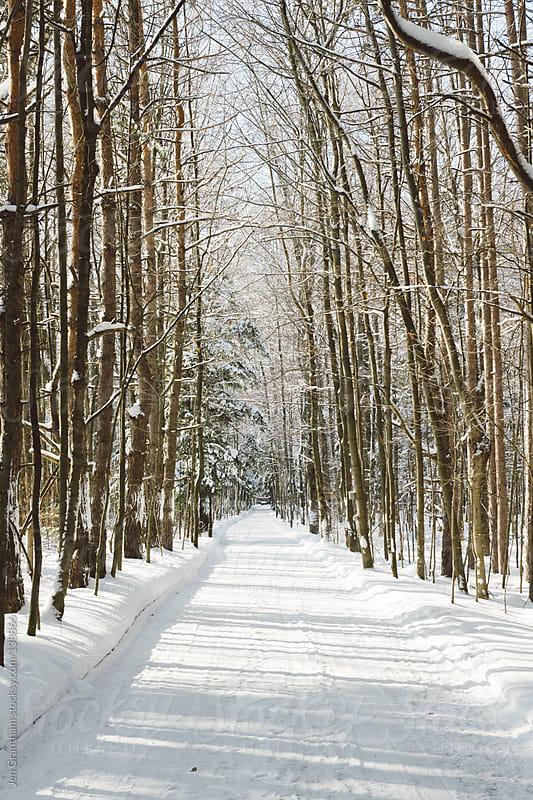 Snowy Road by Jen Grantham for Stocksy United