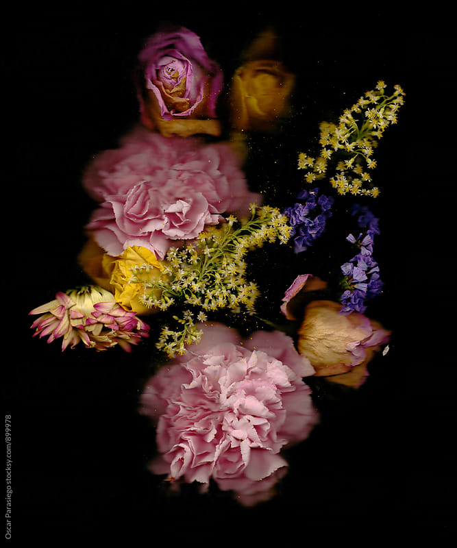 Flowers in a black background by Oscar Parasiego for Stocksy United