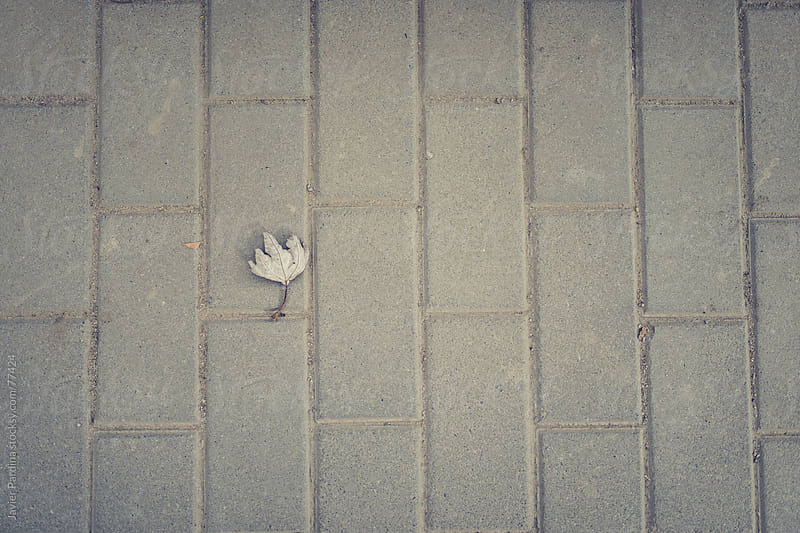 a leaf on the street by Javier Pardina for Stocksy United