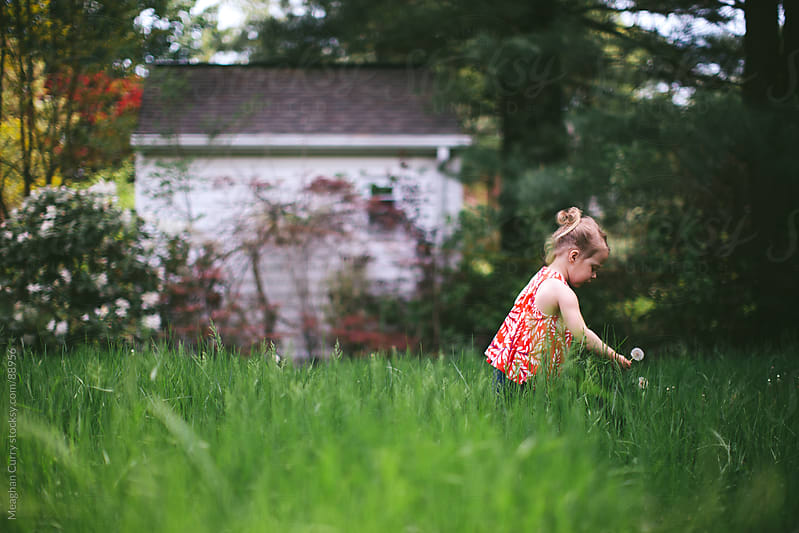 little girl picking a dandelion in a field by Meaghan Curry for Stocksy United