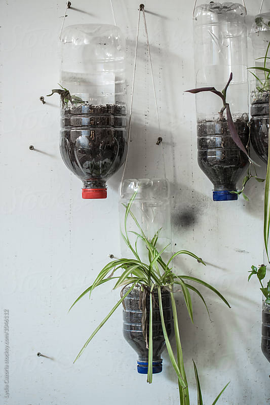 White board with recycled bottles and plants by Lydia Cazorla for Stocksy United